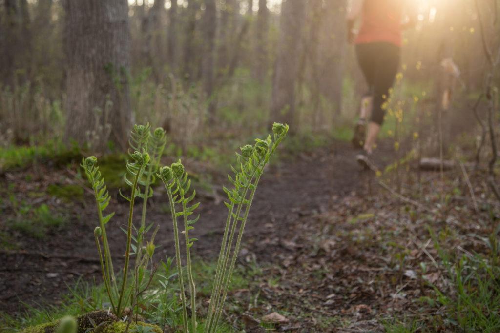 Run, Bike, Swim: Where to Stay Active Outdoors on Nantucket img