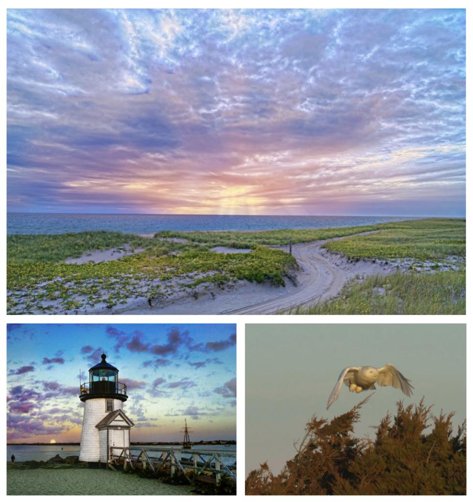 Distinctively Nantucket: Sam Hill, Nantucket Photographer img