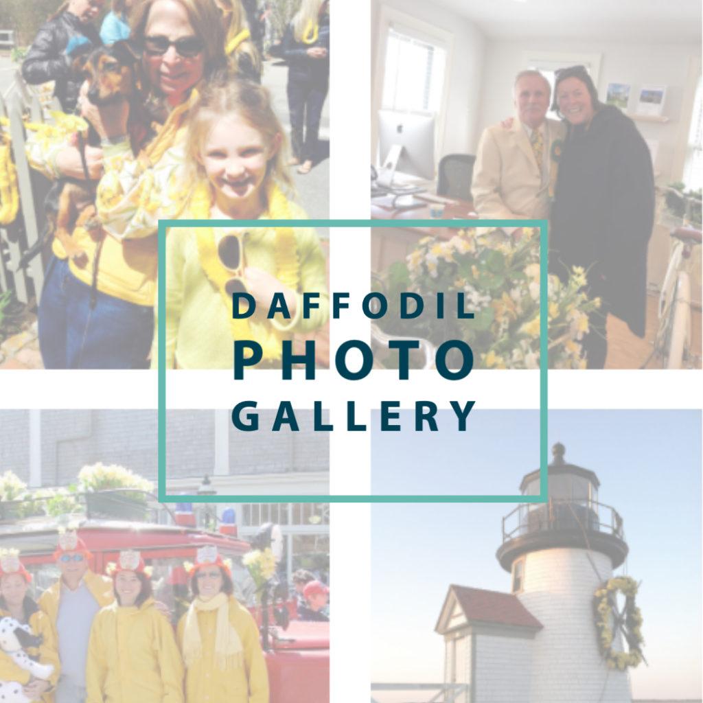 Daffodil Photo Gallery img